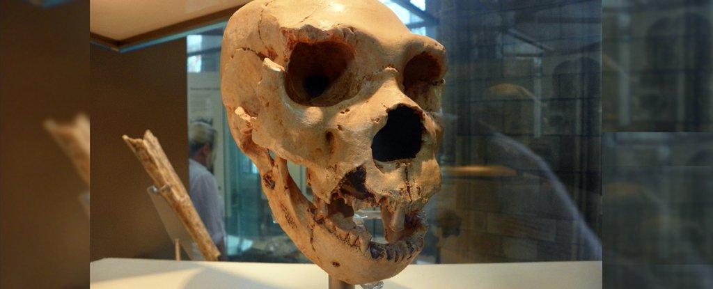 Cranium 5 of H. heidelbergensis from Sima de los Huesos.