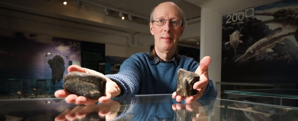 Ireland's Only 2 Dinosaur Bones Have Just Been Confirmed For The First Time