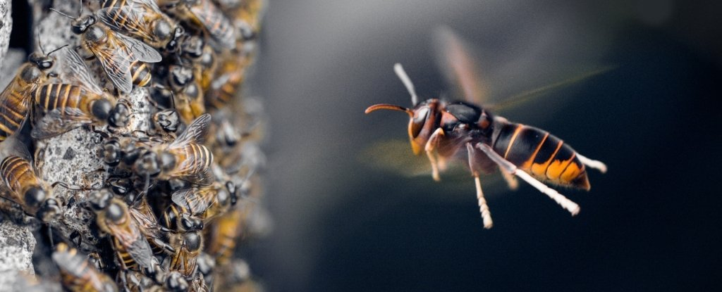 Bees Witnessed Using Tools in Nature For The First Time... And It's Really Gross