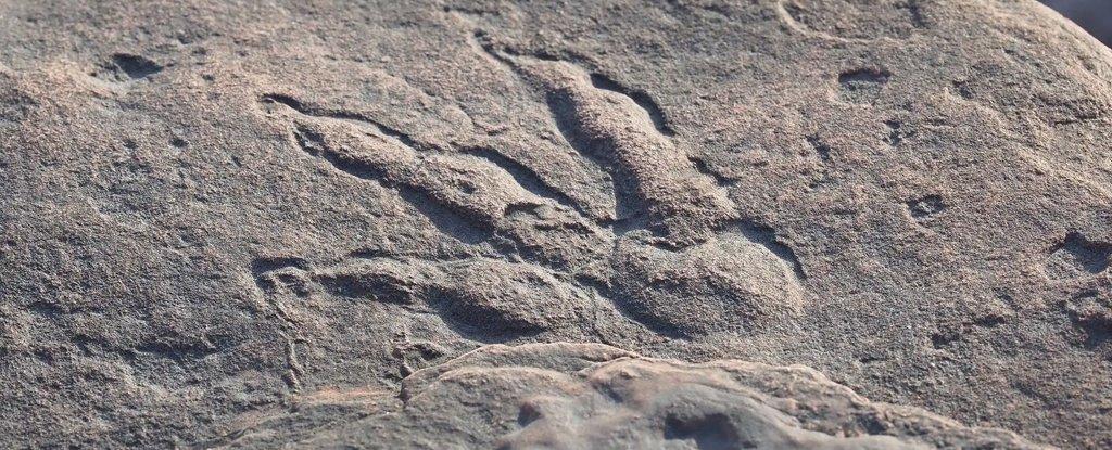 10-cm long print found near Bendricks Bay, south Wales, 30 January 2021.