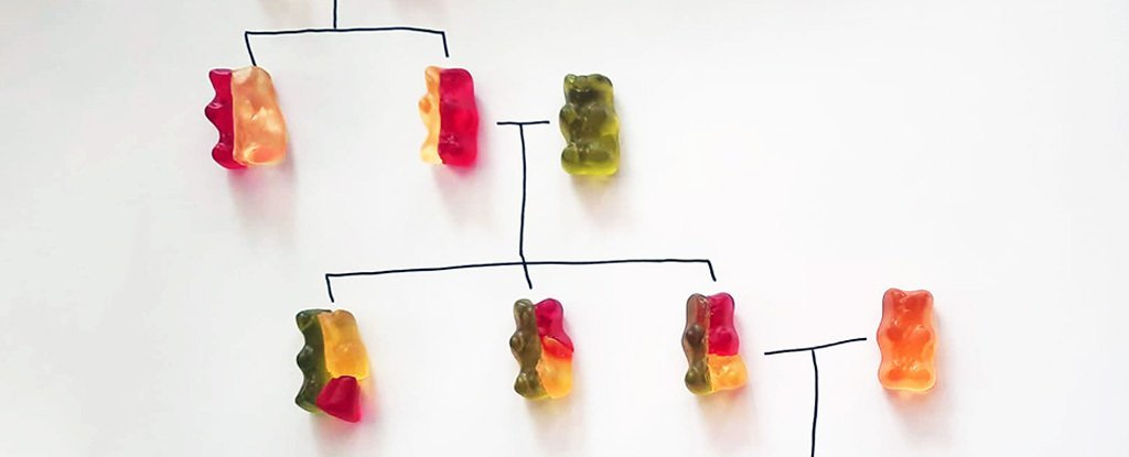 This Simple Gummy Bear Experiment Is The Perfect Way to Teach Complex Genetics