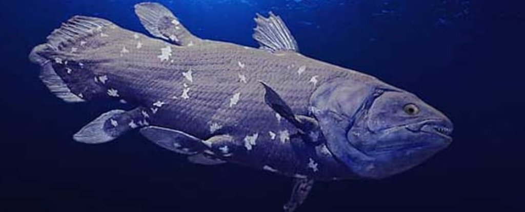 Bizarre Coelacanth Hasn't Spent 65 Million Years Unchanged After All, Its Genome Reveals - ScienceAlert