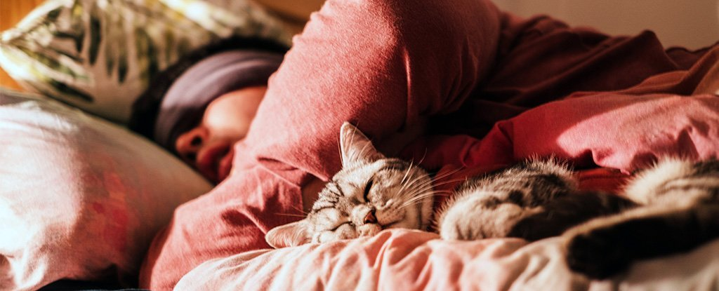 There Could Be a Dramatic Hidden Impact of Not Having a Regular Bedtime, Study Shows - ScienceAlert