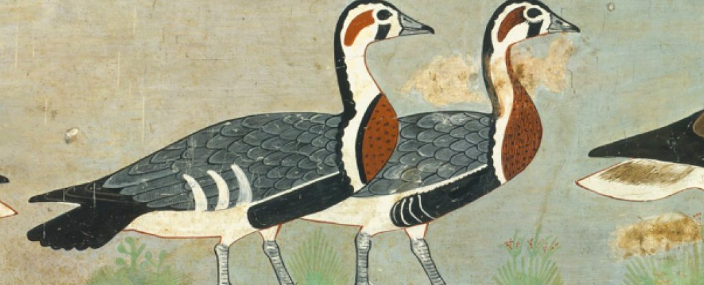 Gorgeous Egyptian Art From 4,600 Years Ago Reveals an Extinct Goose