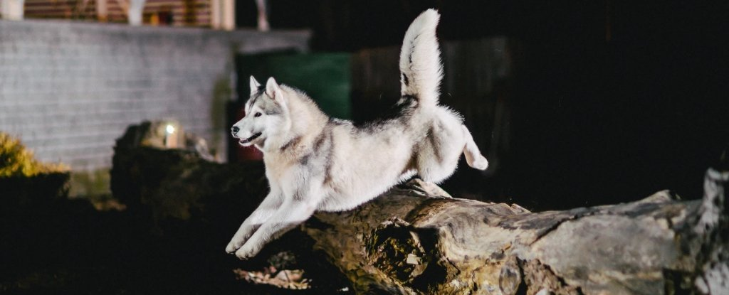 10,000-Yr-Outdated Canine Stays From Alaska Trace at a Lovely Story of Migrating Collectively