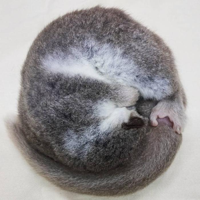 010 lemurs 1