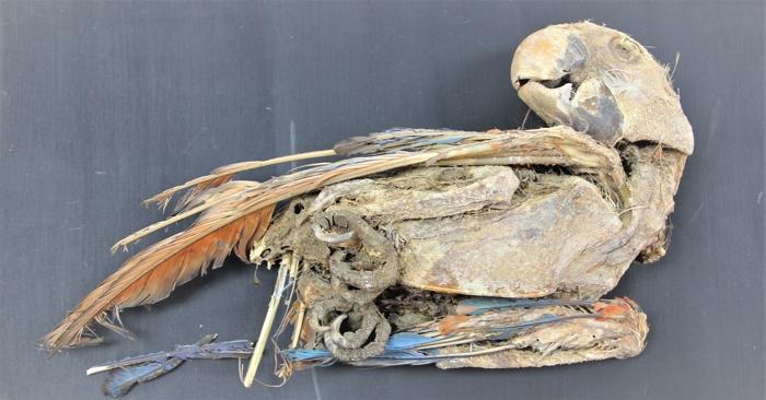 010 parrots 2