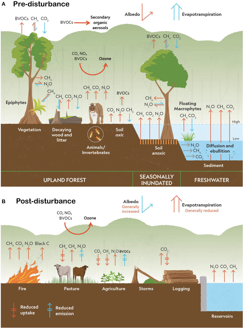 Greenhouse gases in the Amazon