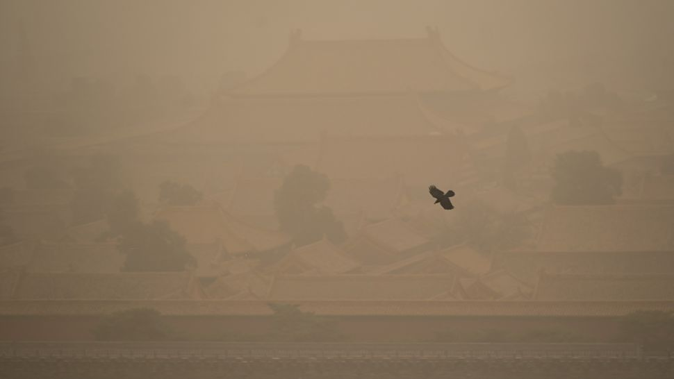 Crow flies through the thick dust over the Forbidden City Palace. (WANG ZHAO/AFP/Getty Images)