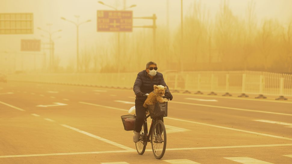 A masked man cycling with his dog during the sandstorm in Beijing, China. (Getty Images)