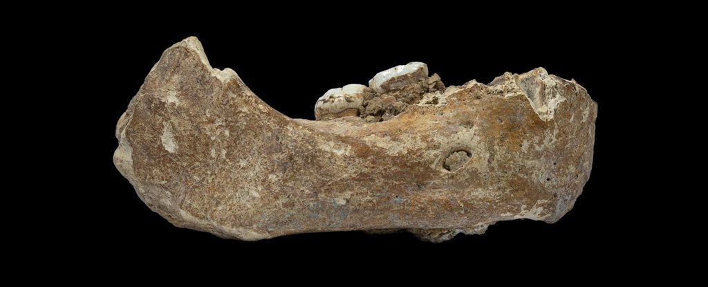 One of few known Denisovan remains, a jawbone found in Tibet.