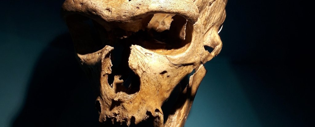 In a Momentous Discovery, Scientists Show Neanderthals Could Produce Human-Like Speech