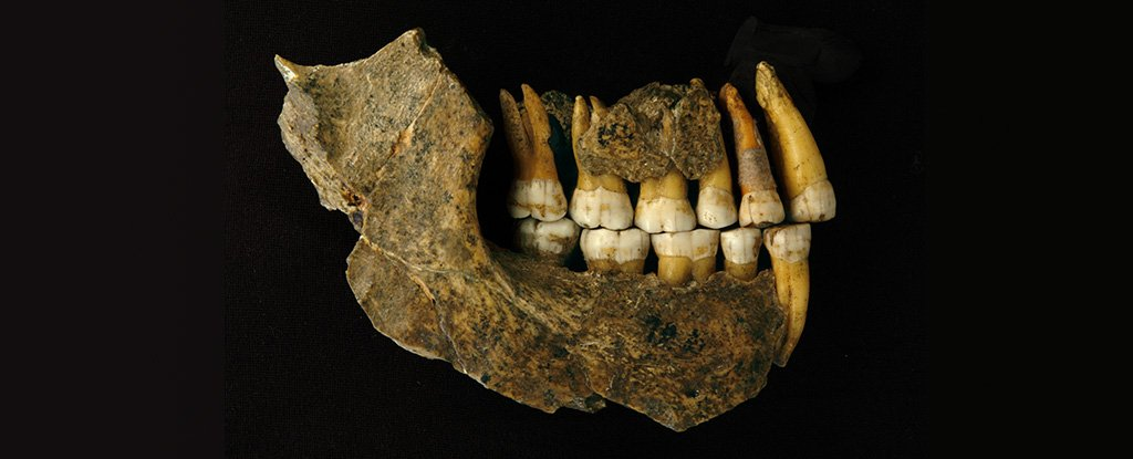 Maxilla and mandible jaw, assemblage of a late Neanderthal from Spy Cave.