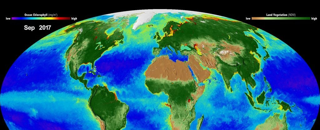 A visualization of Earth's biosphere.