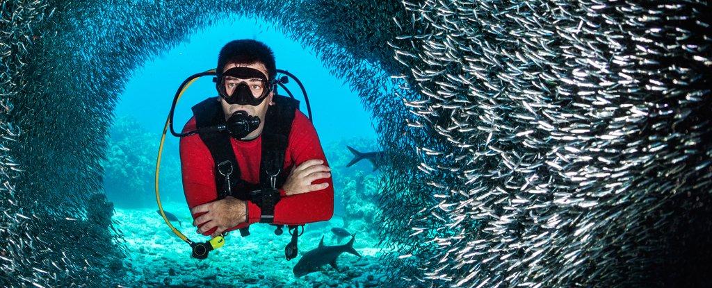 Swimming through a fish shoal.