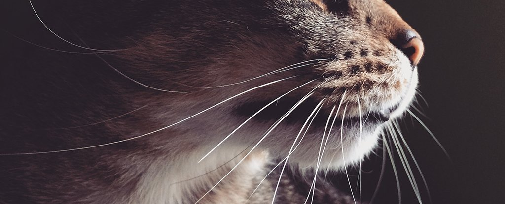 cats-whiskers_1024.jpg