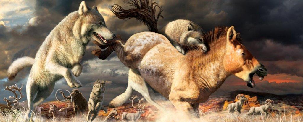 Illustration of Pleistocene wolves taking down prey.