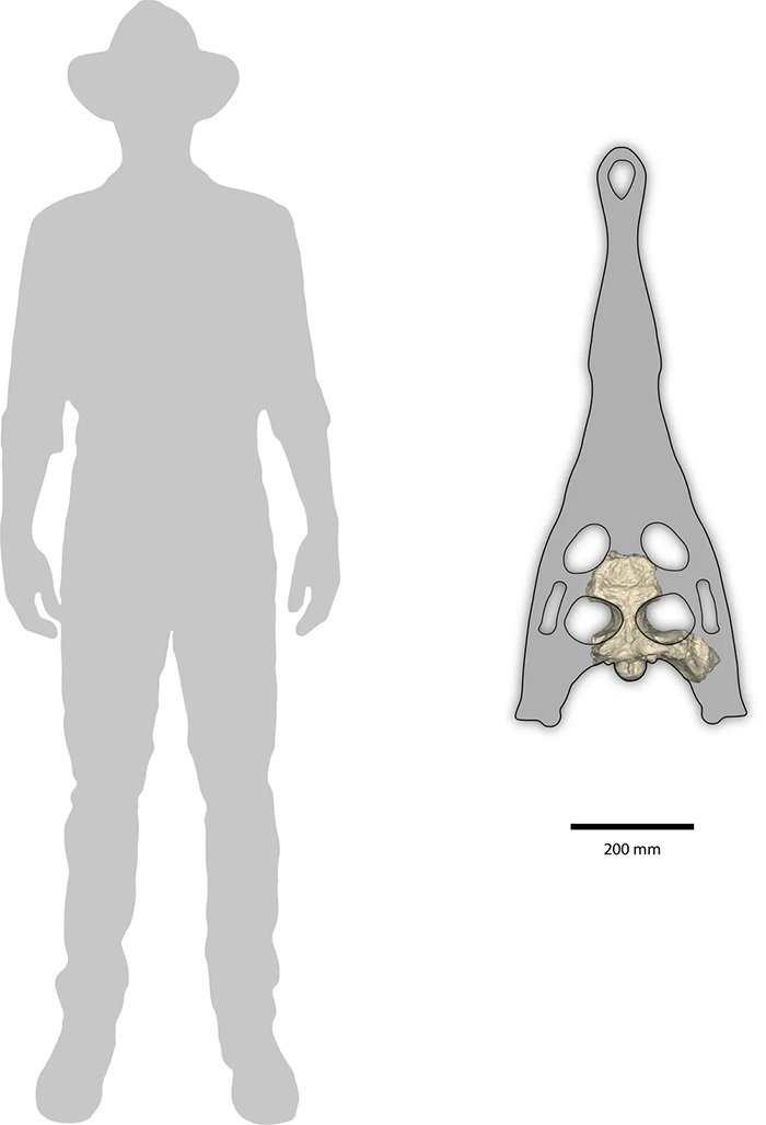 Silhouette of a human with a river boss skull next to it, about half the body's length