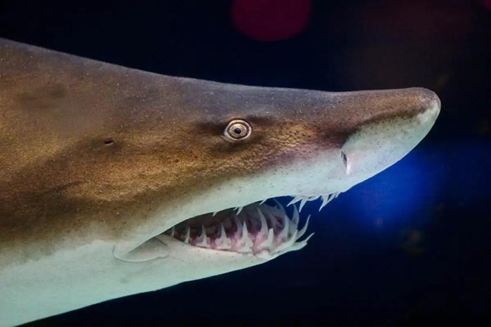 010 shark teeth 3