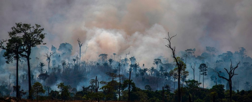 Huge Part of Amazon Rainforest Has Now 'Flipped' to Emitting More CO2 Than It Absorbs
