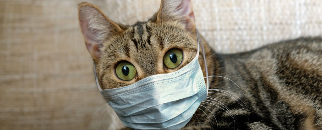 The research into better understanding SARS-CoV-2 goes on, and a new study sheds some light on how likely our household pets are to get infected – s