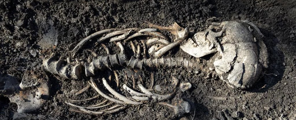 Twin Viking Babies Found in a Surprisingly Christian-Looking Burial in Sweden