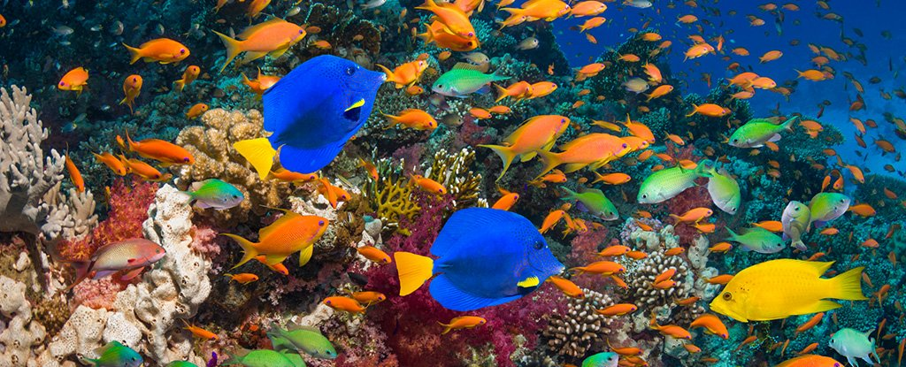 Scientists Are Terrified That Earth's Coral Reefs Are Doomed. Only We Can Save Them