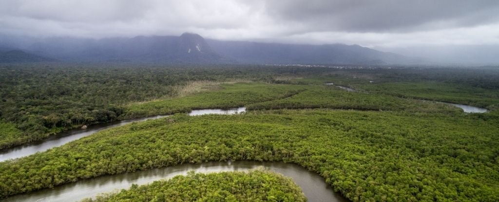 CO2 Rise in The Amazon Could Affect Rainfall More Than Deforestation