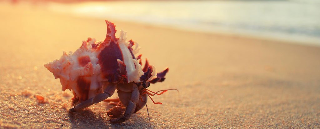 Plastic Toxin Are Tricking Hungry Hermit Crabs With a Tasty Smelling Lie