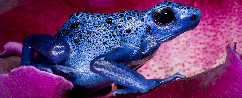 These Toxic Critters Have Evolved a Surprising Way to Avoid Poisoning Themselves