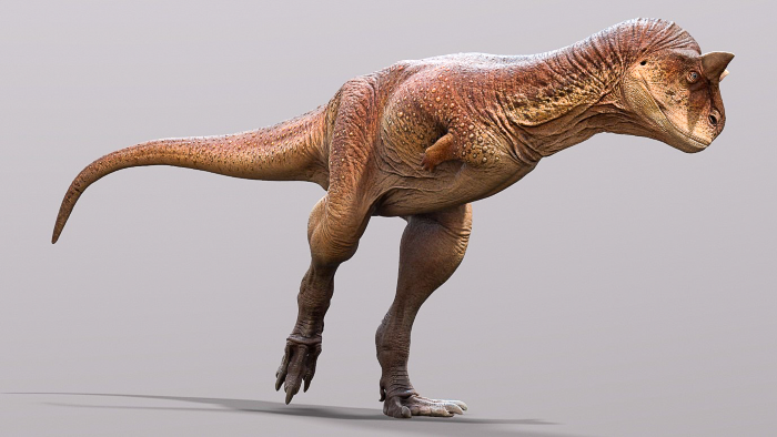 A muscled dinosaur in orange hues with strong legs and really short arms