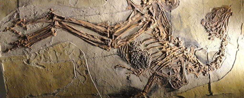 Traces of Dinosaur DNA May Still Exist in 125 Million-Year-Old Bones, Scientists Say