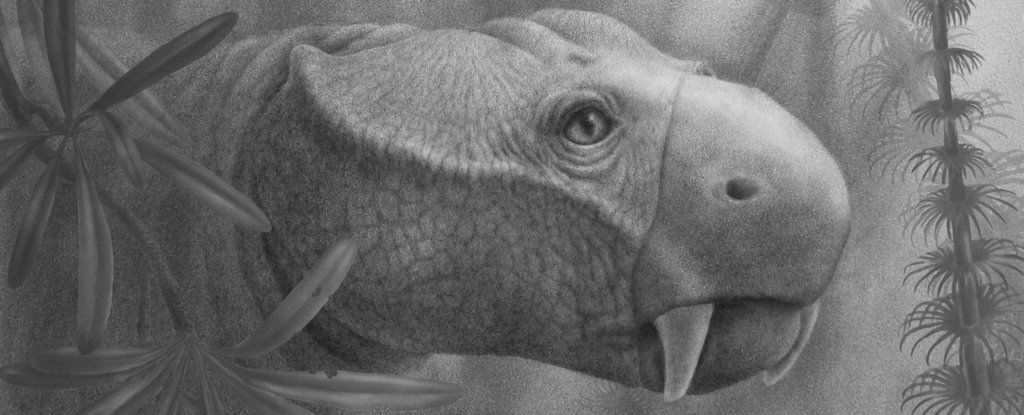 Scientists Traced The Weird Origins of Tusks to Find Out Where They Came From