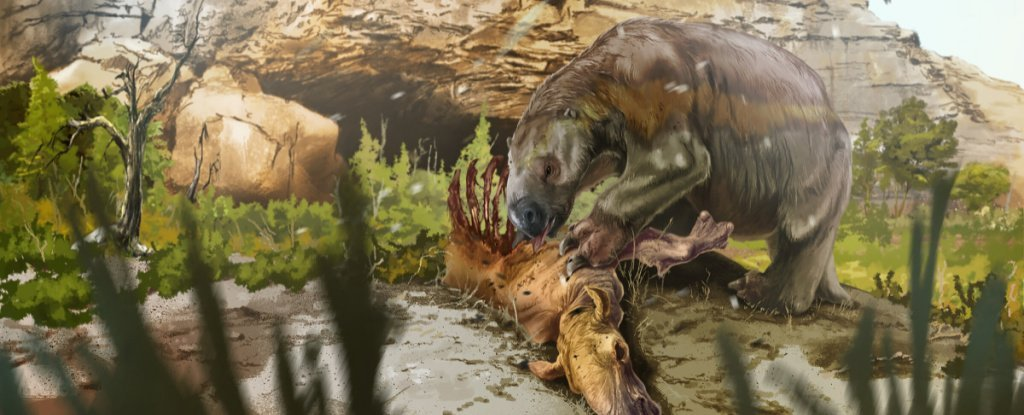 This Ancient And Ginormous Sloth Had an Unexpected Supplement in Its Diet