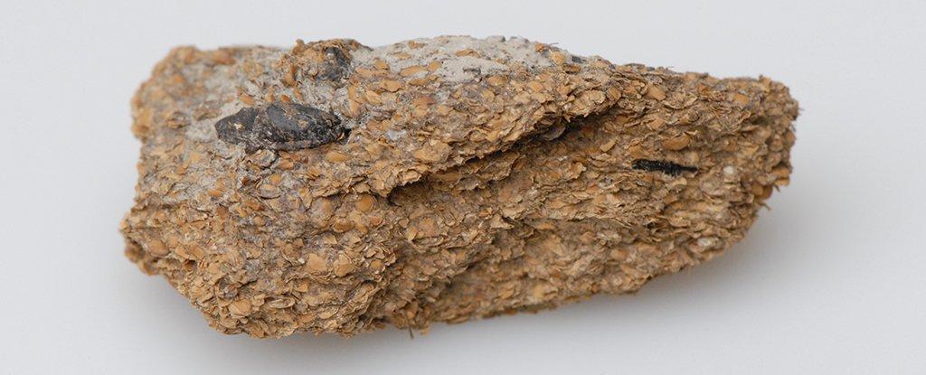 2,600 year-old human poop from the Hallstatt salt mines.