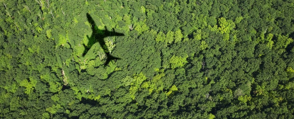 Jet Fuel Made From This Crop Could Cut Emissions by Up to 68%, New Analysis Proves