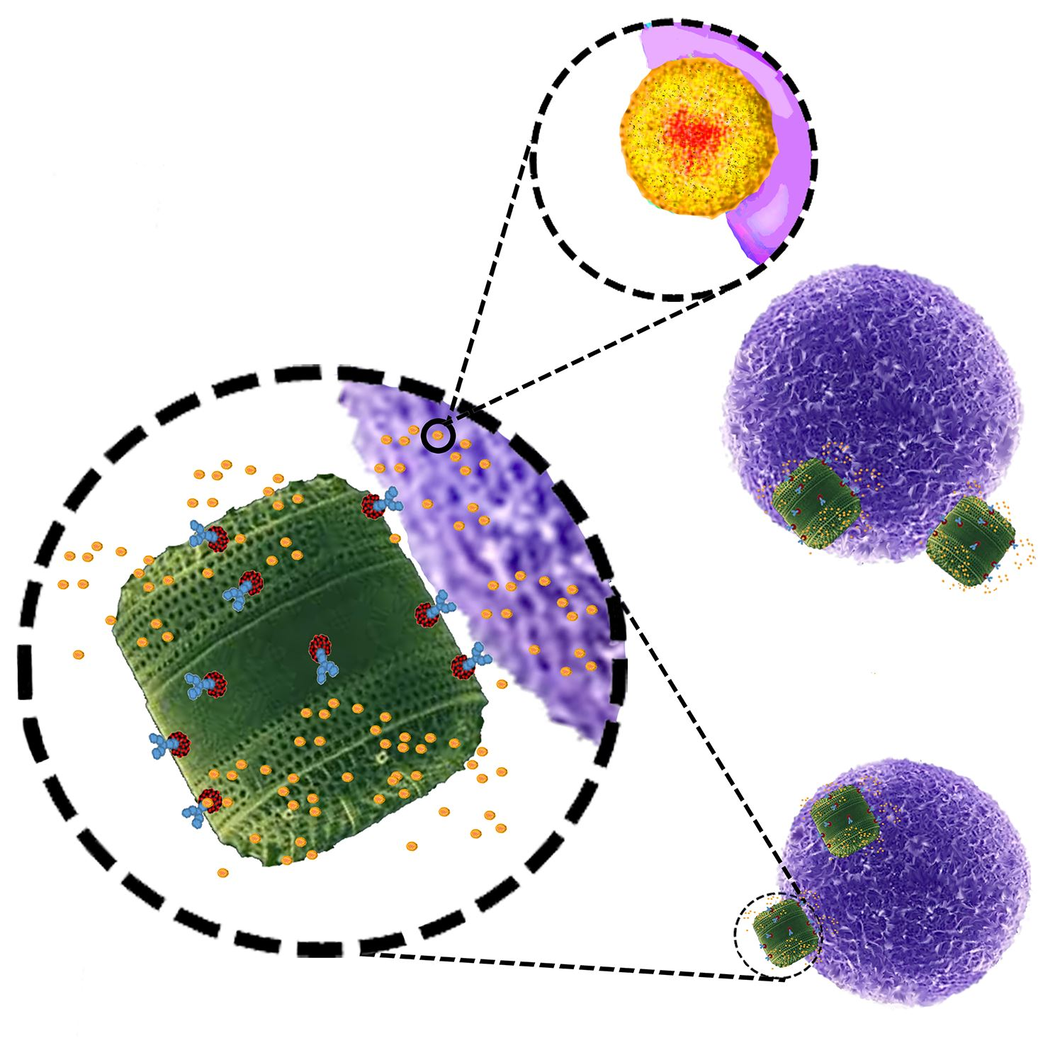 Imagem Algas-cancer-drogas Nature Communications-1