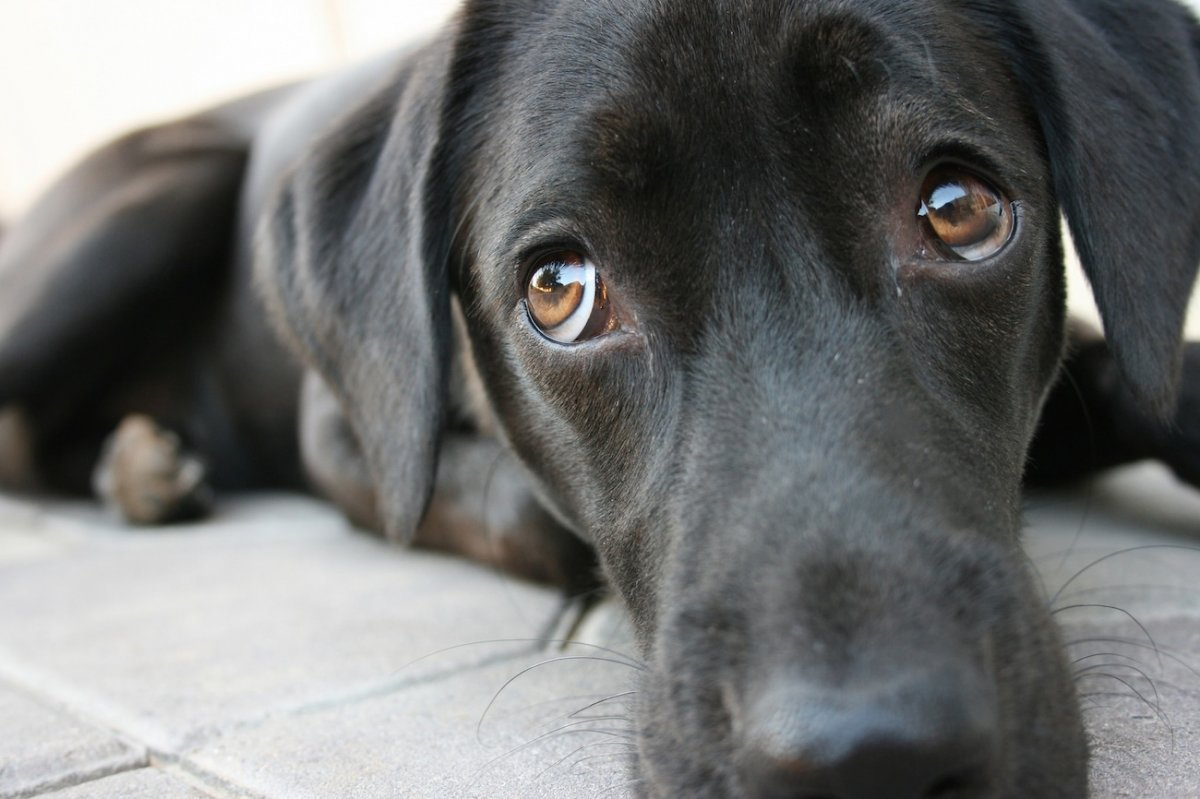 7 Weird Dog Behaviours And What They Mean