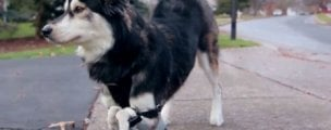 WATCH: 3D printing lets disabled dog run for the first time
