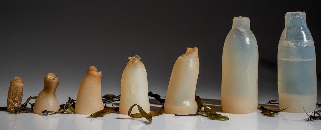 This Biodegradable, Algae-Based Water Bottle Breaks Down When It's Empty