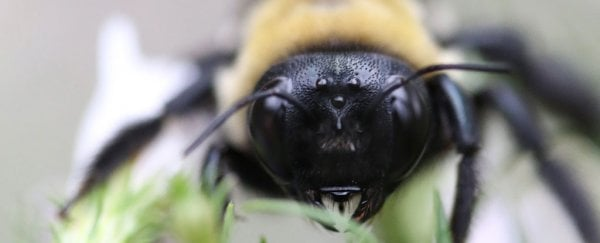 In Australia, bees and wasps are more dangerous than spiders and snakes