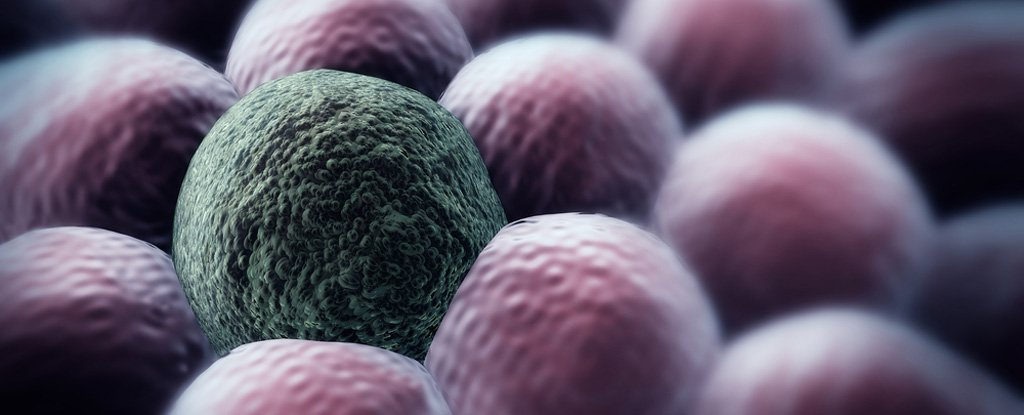 There's a New Approach to Fighting Cancer: Keeping Cancer Cells Alive
