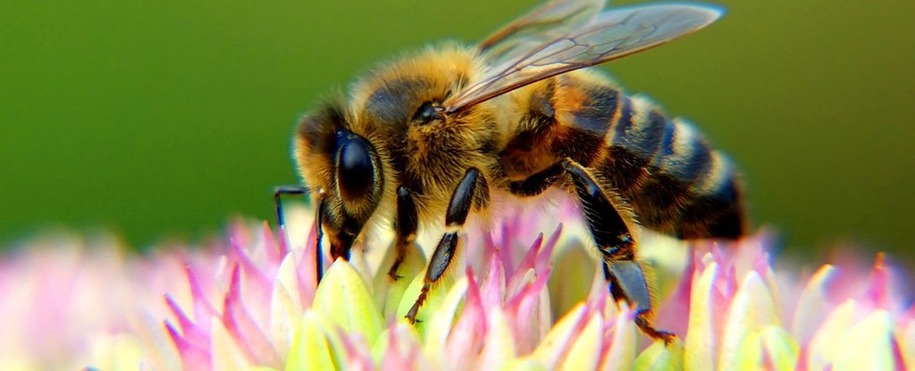 The World's Pollinators Are Dying Out, And All Our Favourite Foods Could Go With Them