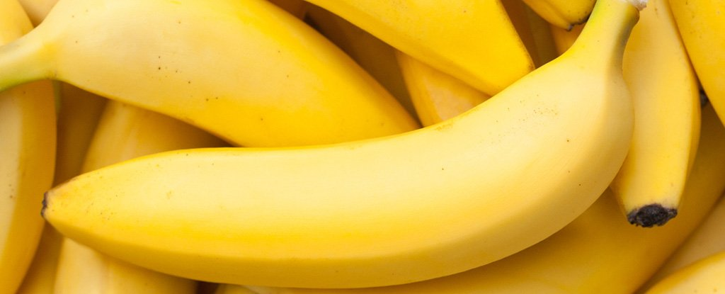 Lewis University Email >> A Group of Scientists Plans on Paying Young Women $900 to Eat Genetically Modified Bananas