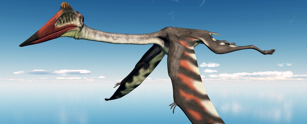 A Flying Predator The Size of a Plane Could Have Been The Largest of Its Kind