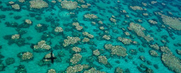 The Great Barrier Reef can no longer be saved by current efforts, Scientists Warn