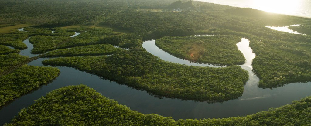 A Vast Reserve Of Pristine Amazon Rainforest Has Just Been Saved