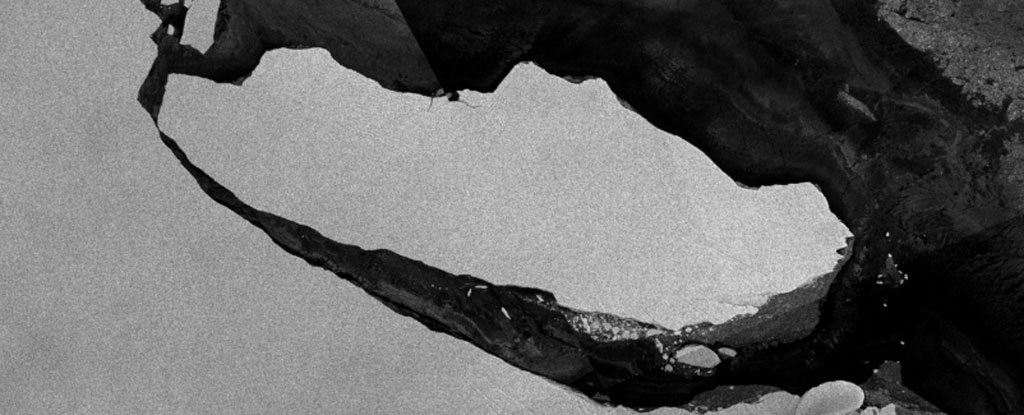 That Giant Antarctic Iceberg Just Revealed an Ecosystem Hidden For Thousands of Years