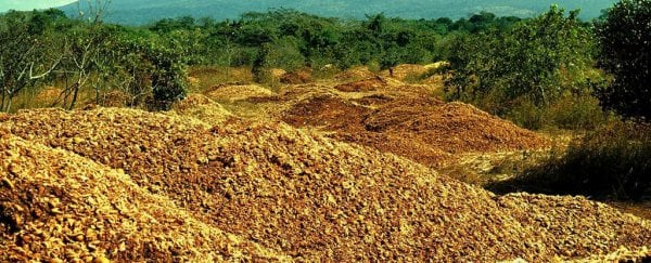How 12,000 Tonnes of Dumped Orange Peel Grew Into a