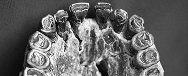 These ancient teeth are the first known evidence of right-handedness